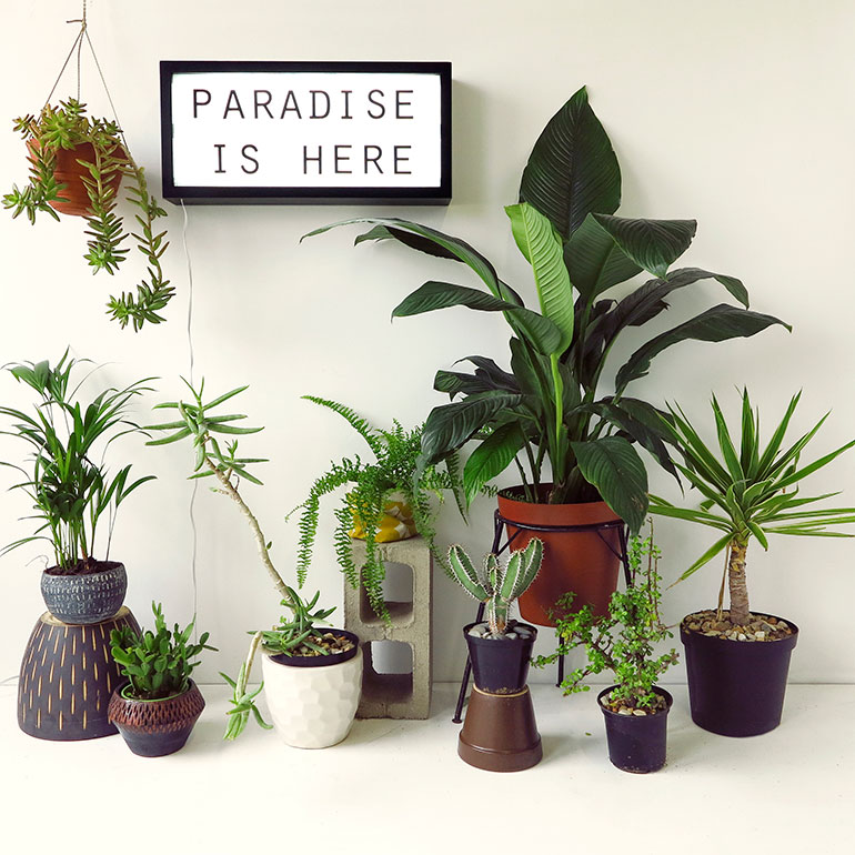 Our Top 7 Unkillable Indoor Plants + The Ultimate Desk Plants ...